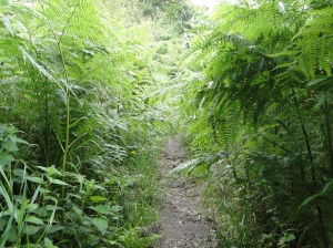 overgrown path