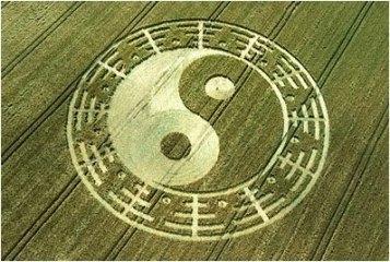 yinyang crop