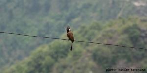 birdon a wire